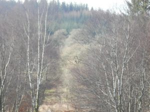 Fearnoch Forest,Walks-Oban-What To Do-Attractions-Scotland