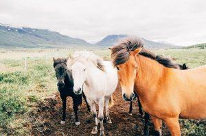 Highland Animal Reiki-Oban-Shops And Services-Services-Scotland