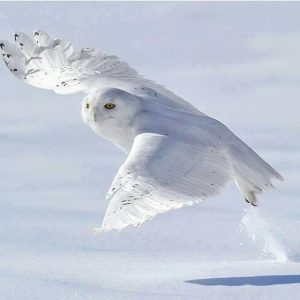 Highland Animal Reiki,Book Today-Oban-Shops And Services-Services-Scotland