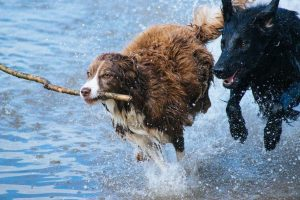 Highland Animal Reiki,Happy,Balanced-Oban-Shops And Services-Services-Scotland