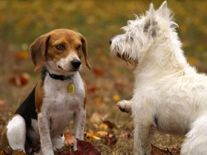Highland Animal Reiki,Dogs-Oban-Shops And Services-Services-Scotland