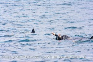 Basking Shark Scotland-Oban-What To Do-The Sea-Scotland