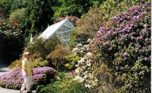 Arduaine Gardens-What To Do-Attractions-Oban-Scotland