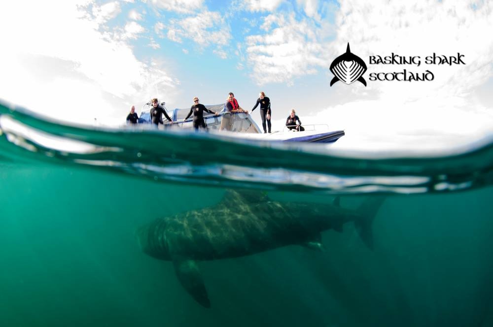 Basking Shark Scotland-What To Do-Sea-Oban-Scotland