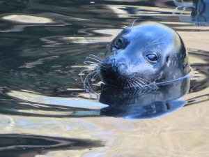 The Scottish Sea Life Sanctuary,Seals-Oban-What To Do-Attractions-Scotland