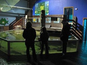The Scottish Sea Life Sanctuary-Oban-What To Do-Attractions-Scotland