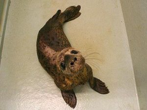 The Scottish Sea Life Sanctuary,Seal Rescue-Oban-What To Do-Attractions-Scotland