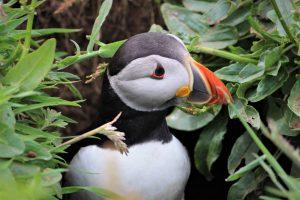 Argyll Safaris, What to do, Activities,Lunga Oban, Argyll, Scotland