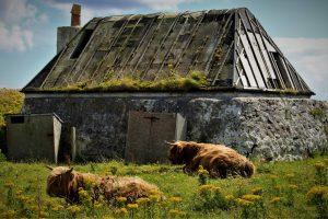 Argyll Safaris, What to do, Activities,Tiree, Oban, Argyll, Scotland