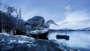 Loch Visions Wildlife Photography Experience, What to do, Activities, Ardfern nr Oban, Scotland