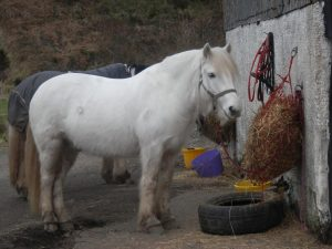Achnalarig Riding Stables-Oban-What To Do-Activities-Scotland
