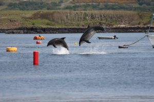 Coastal Connection,Dolphins-Oban-What To Do-The Sea-Scotland