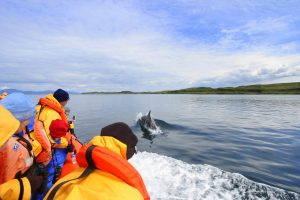 Seafari Adventures, Things To Do, Activities, Easdale nr Oban